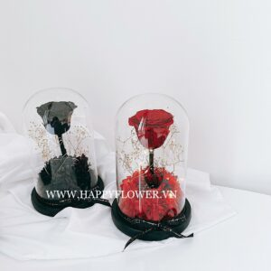 hoahongbattu thebeauty withled sizes