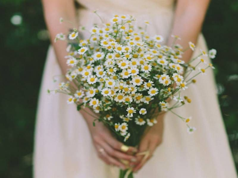 hoa cưới cầm tay cô dâu cúc tana
