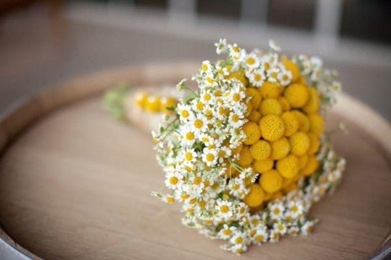 bó hoa cúc tana cầm tay