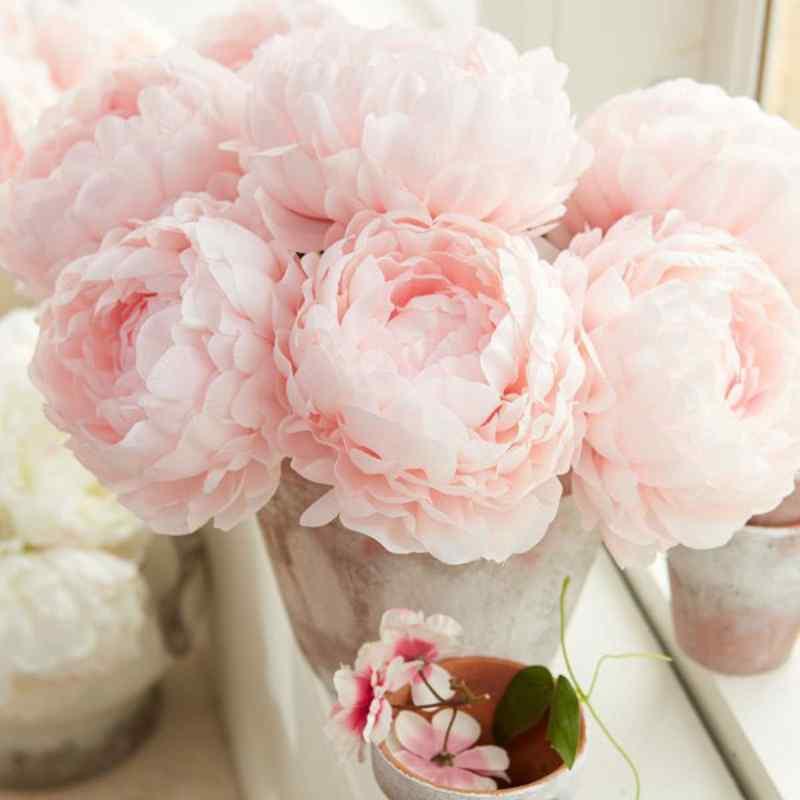 hoa mẫu đơn hồng phấn