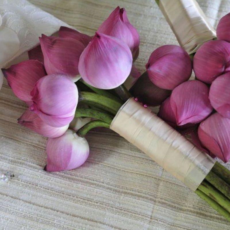 bó hoa sen