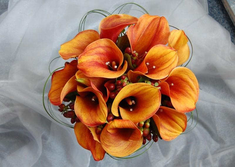 hoa loa kèn cưới màu cam