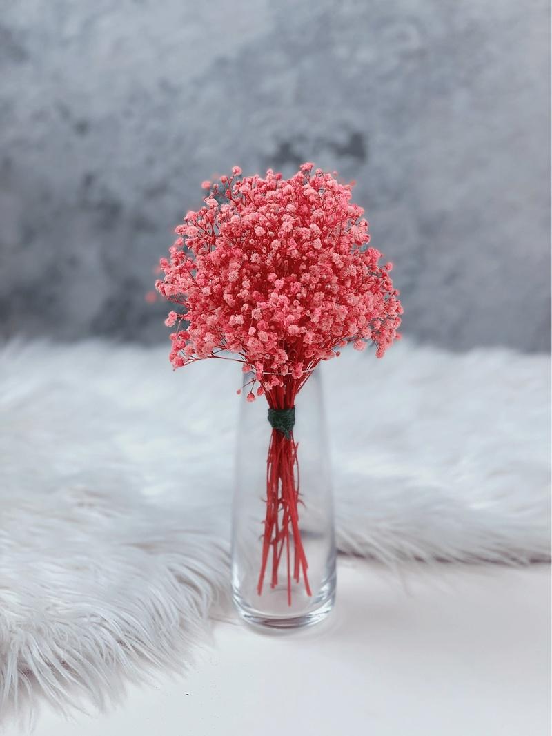 hoa baby đỏ ấm áp