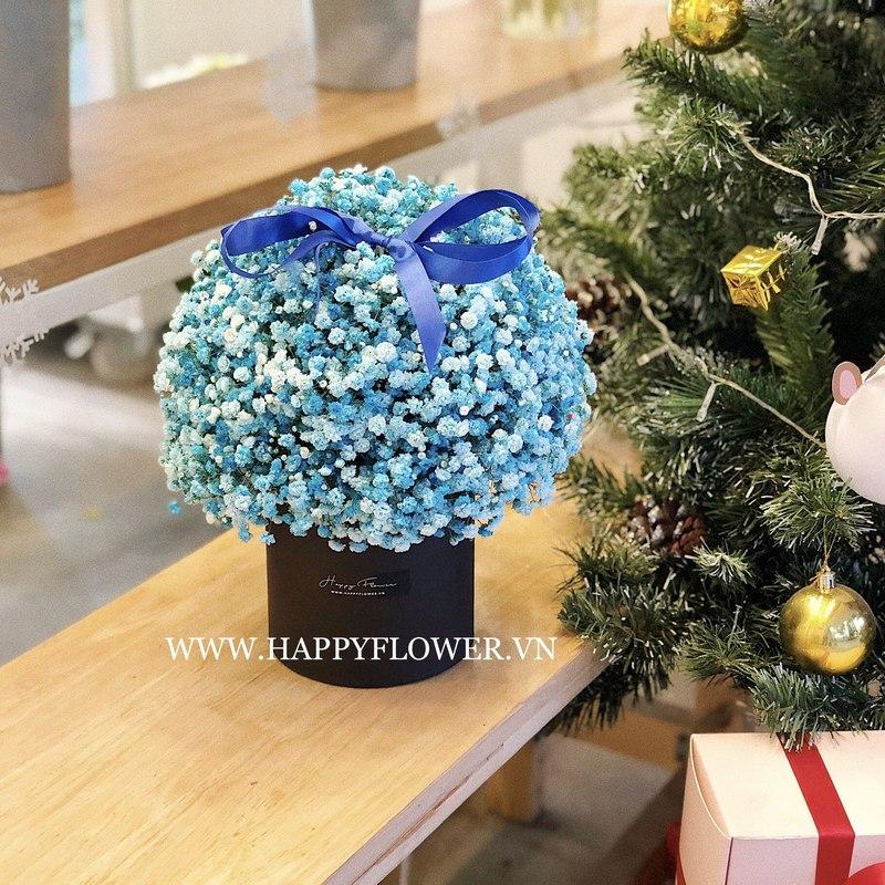 hộp hoa baby xanh dương đẹp mắt