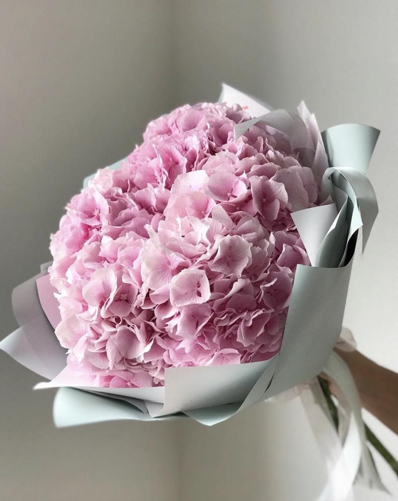 Bó hoa cẩm tú cầu cầm tay