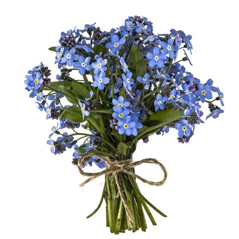 Bó hoa lưu ly xanh lam xinh đẹp