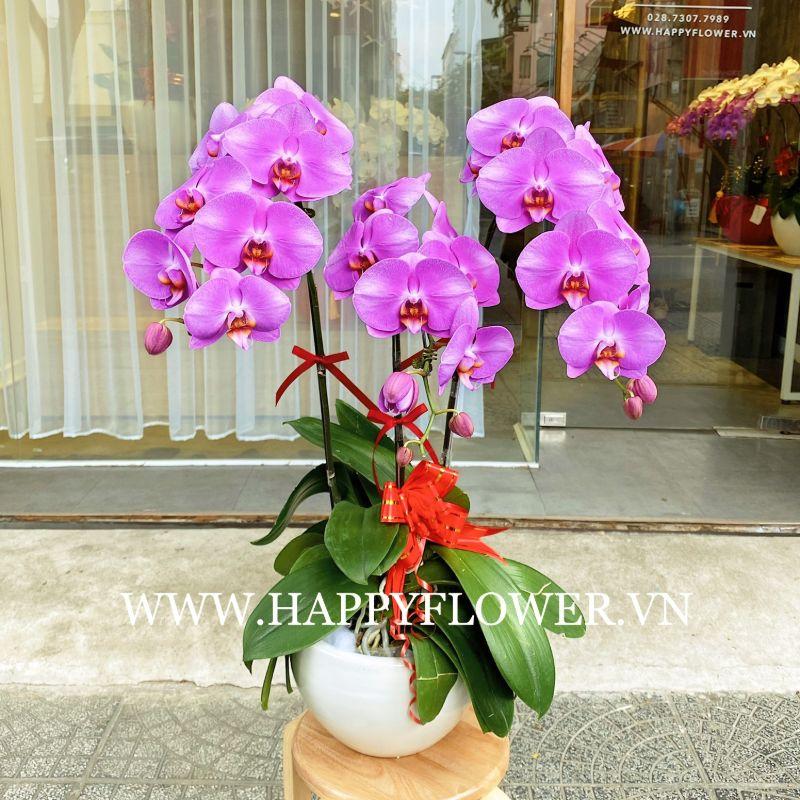 Hoa lan hồ điệp với vẻ đẹp sang trọng