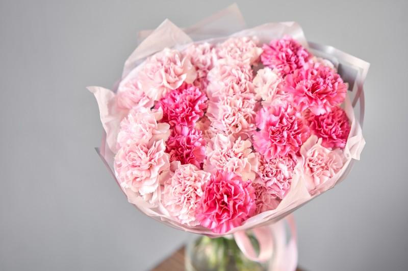 Hoa cẩm chướng màu hồng nhạt và đậm