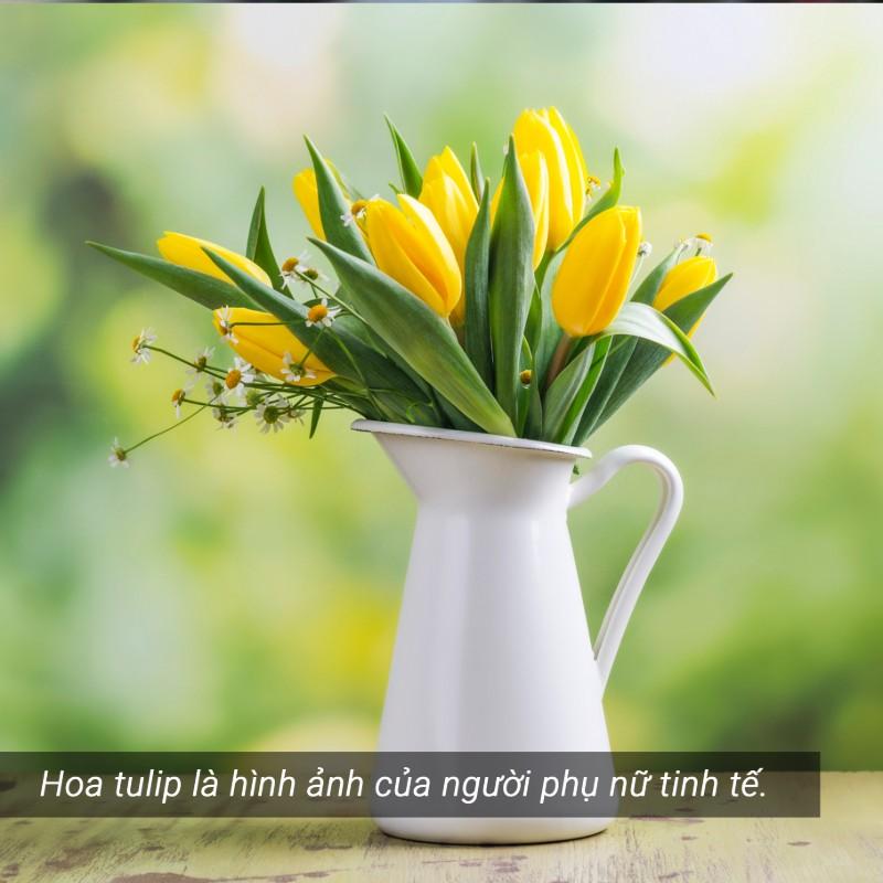 hoa tulip vàng đẹp rực rỡ
