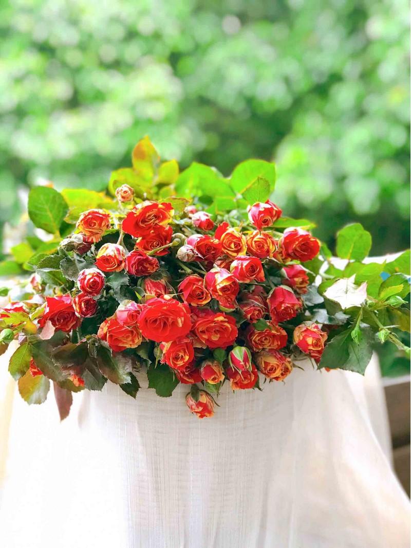 bó hoa hồng đỏ cam đẹp
