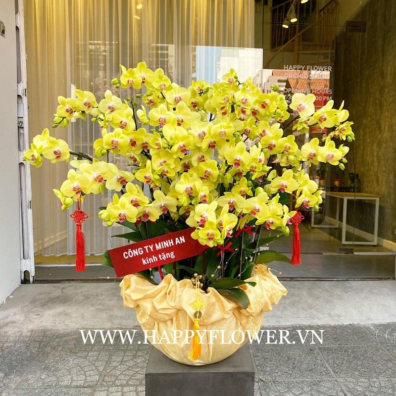 chậu hoa lan hồ điệp vàng 26 cành chúc mừng sinh nhật