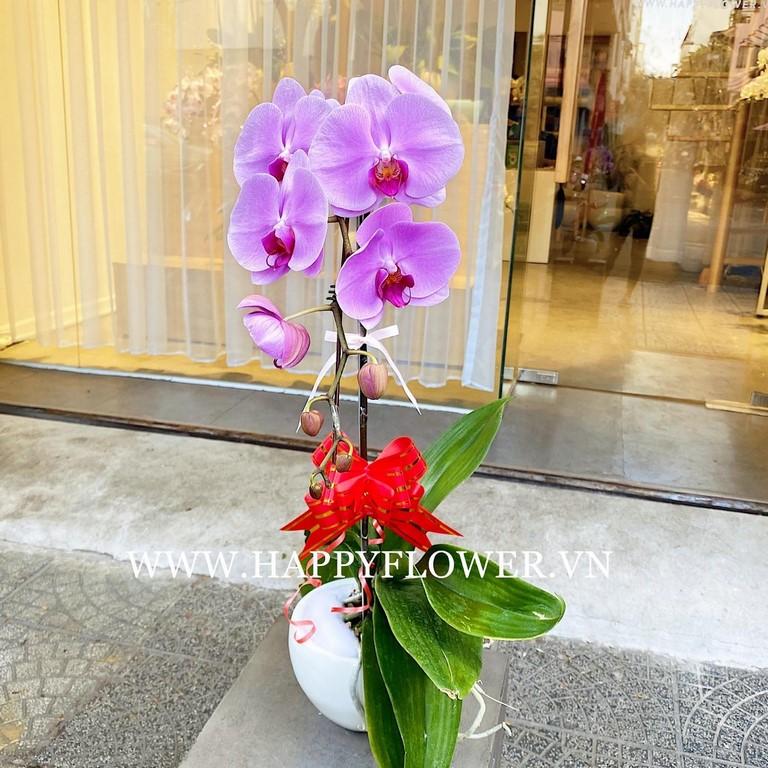 Hoa lan hồ điệp tím 2 cành