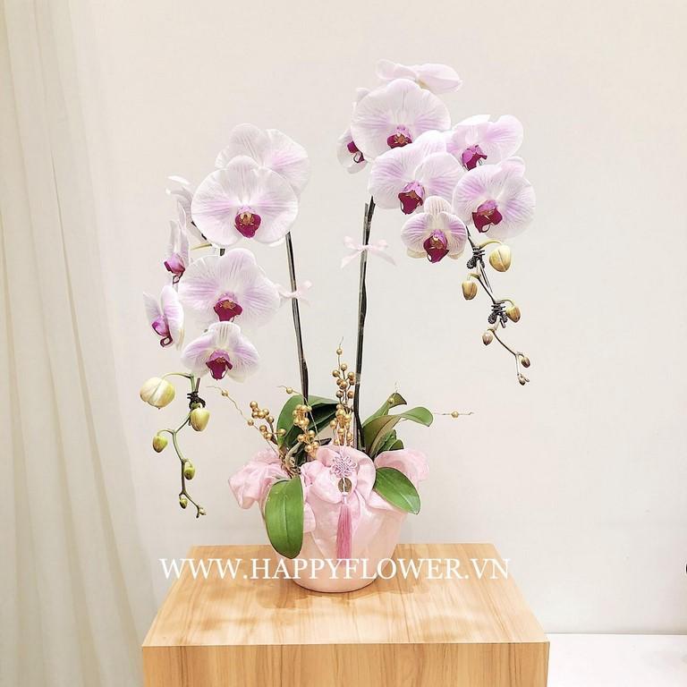 Chậu hoa lan hồ đẹp để bàn