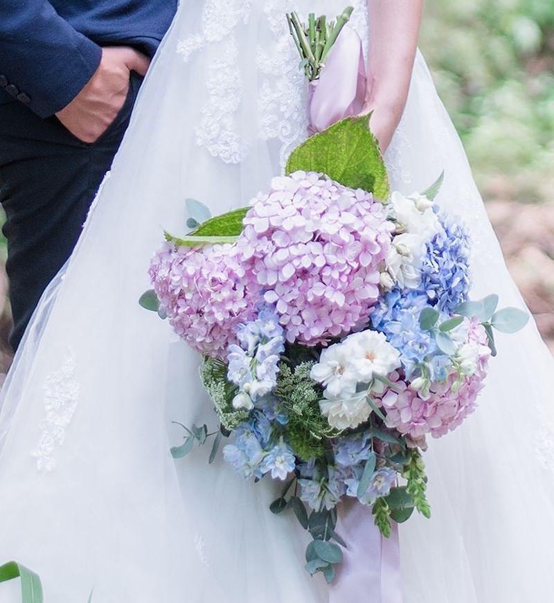 hoa cẩm tú cầu màu hồng tím