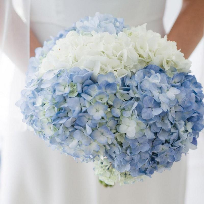 hoa cẩm tú cầu màu xanh và trắng