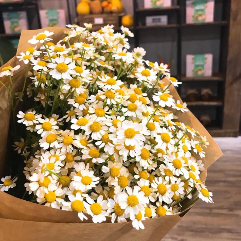 bó hoa cưới cầm tay cúc họa mi với giấy gói đơn giản