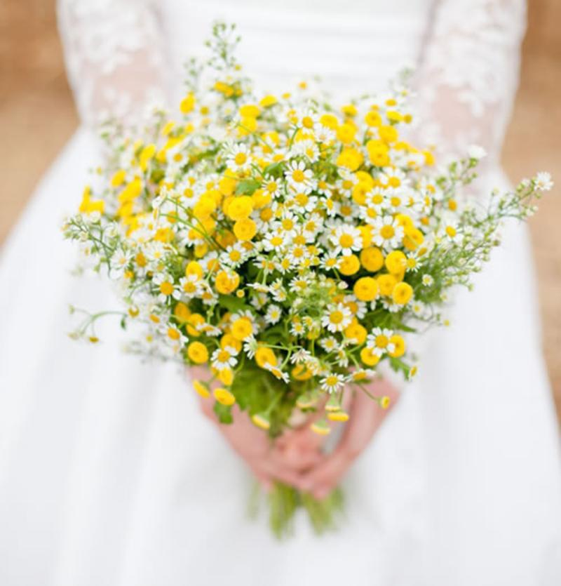 hoa cúc họa mi mix hoa vàng rực rỡ
