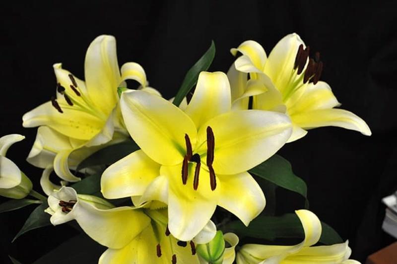Hoa cưới cầm tay vàng làm từ hoa ly vàng