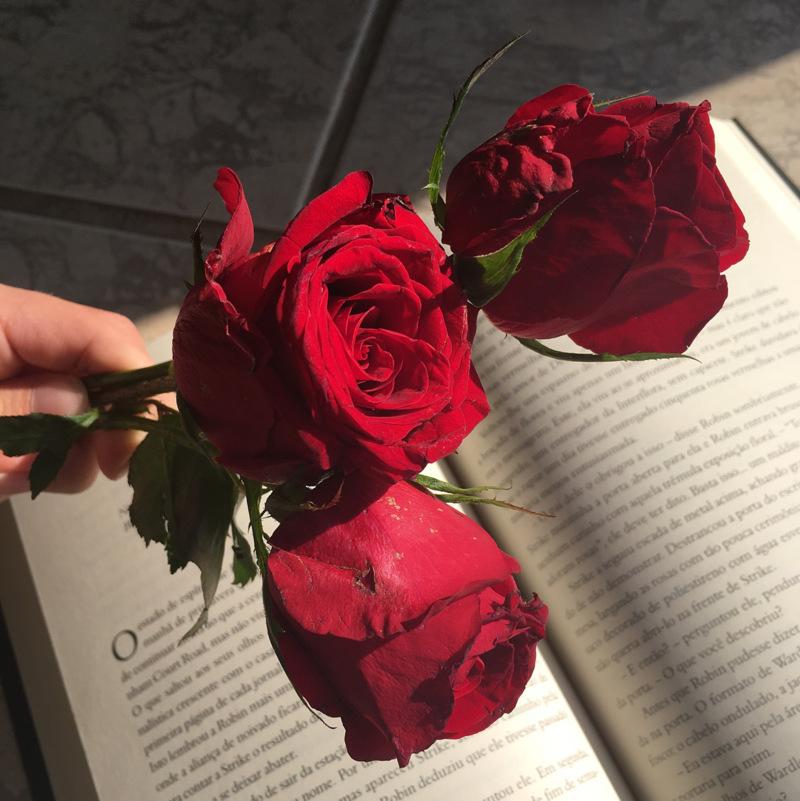 3 hoa hồng autumn rouge đỏ rực rỡ
