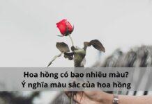 hoa hồng có màu gì