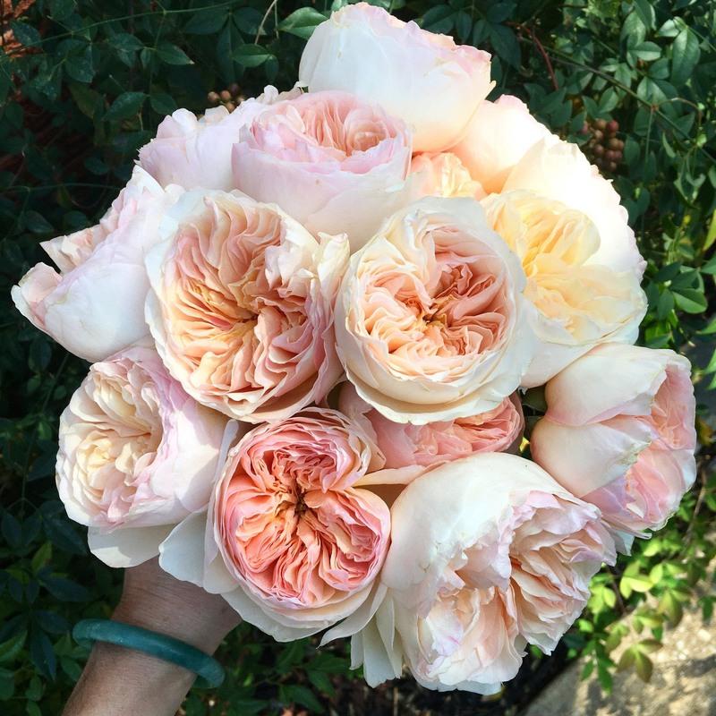 bó hoa hồng trắng tone màu pastel Juliet