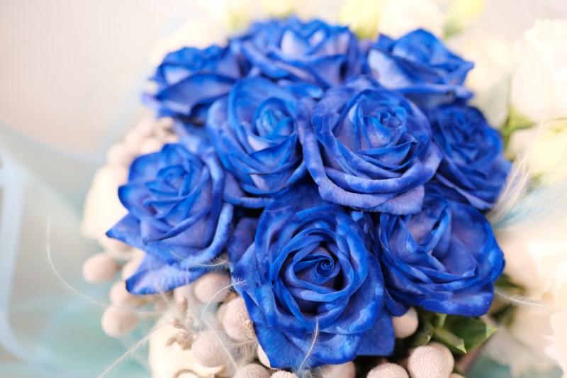 Hoa hồng màu xanh độc và lạ