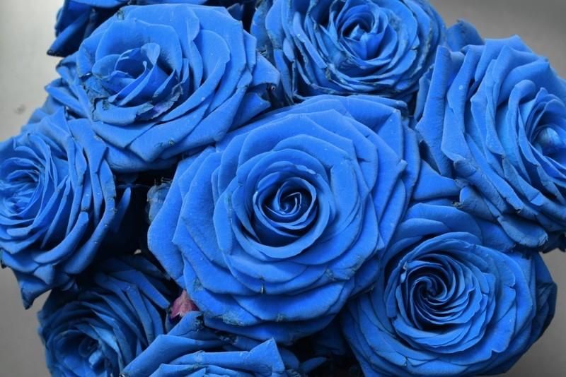 hoa hong mau xanh 2