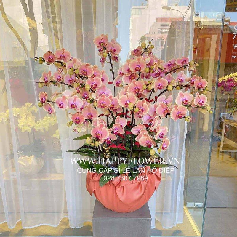 Chậu hoa lan màu hồng cam tuyệt đẹp