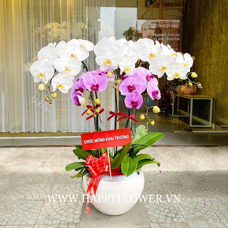 Chậu hoa lan tặng khai trương