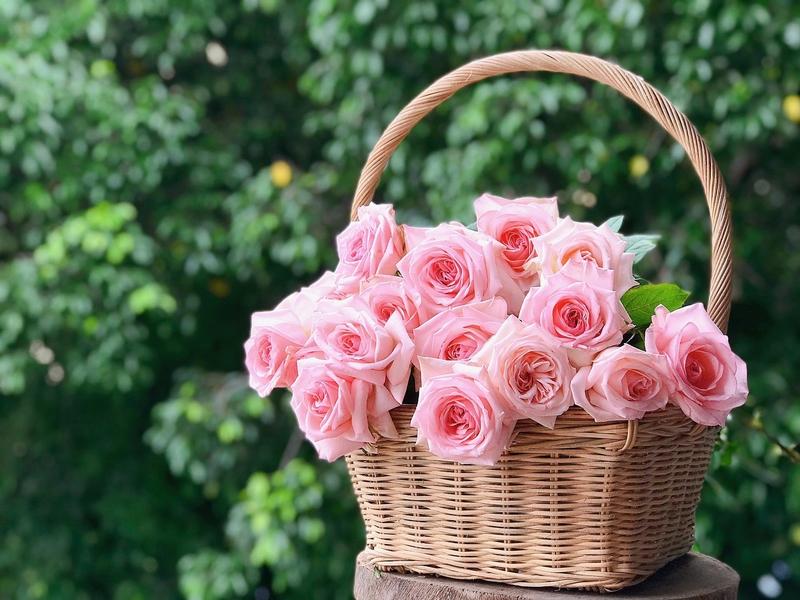 giỏ hoa hồng Ohara đẹp tinh tế