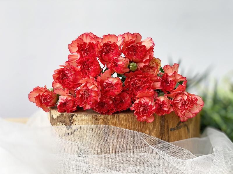 bó hoa cẩm chướng đỏ xinh đẹp