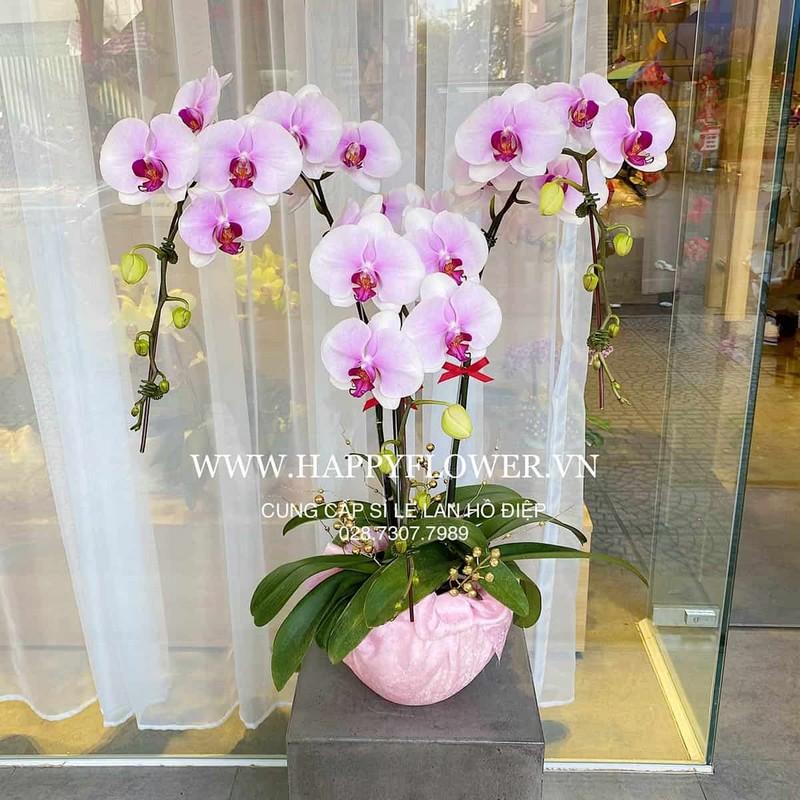 giỏ hoa lan màu hồng đẹp