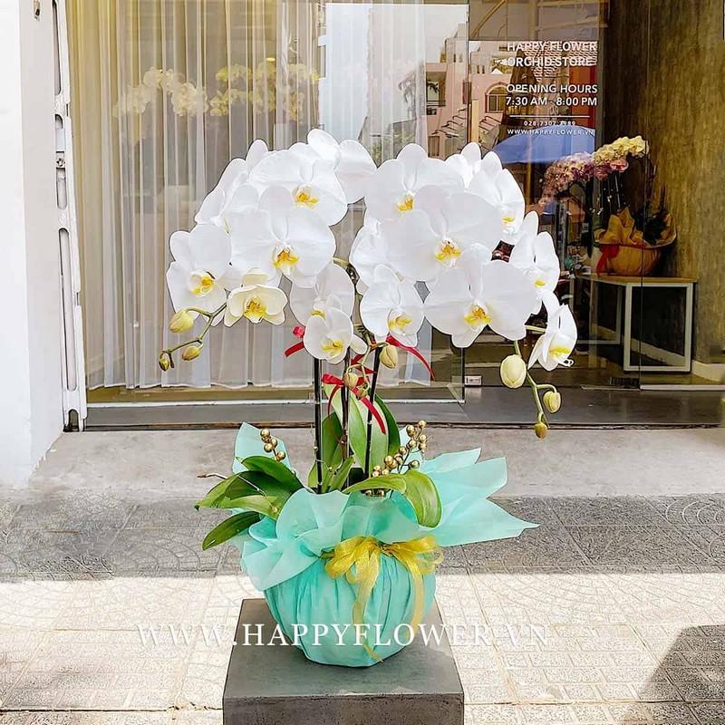 chậu hoa lan màu trắng và giấy gói xanh