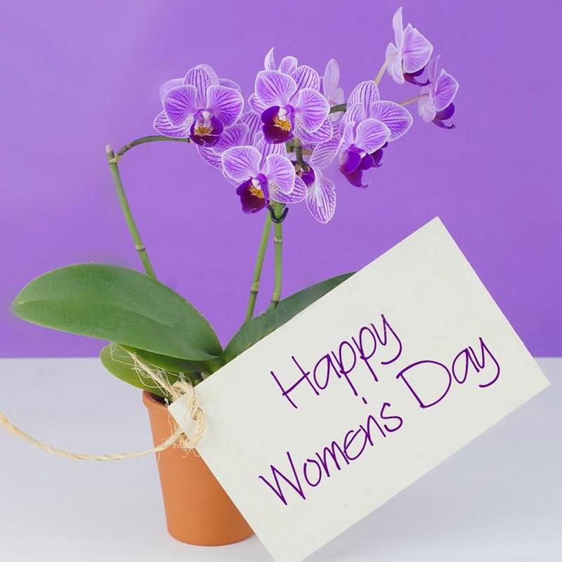 chậu hoa lan màu tím đẹp và đơn giản