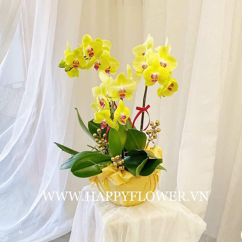 chậu hoa lan 3 cành màu vàng đẹp và đơn giản