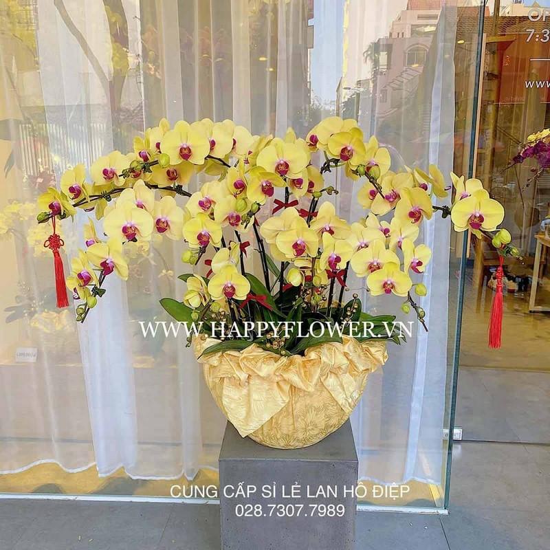 chậu hoa lan màu vàng đẹp và sang trọng