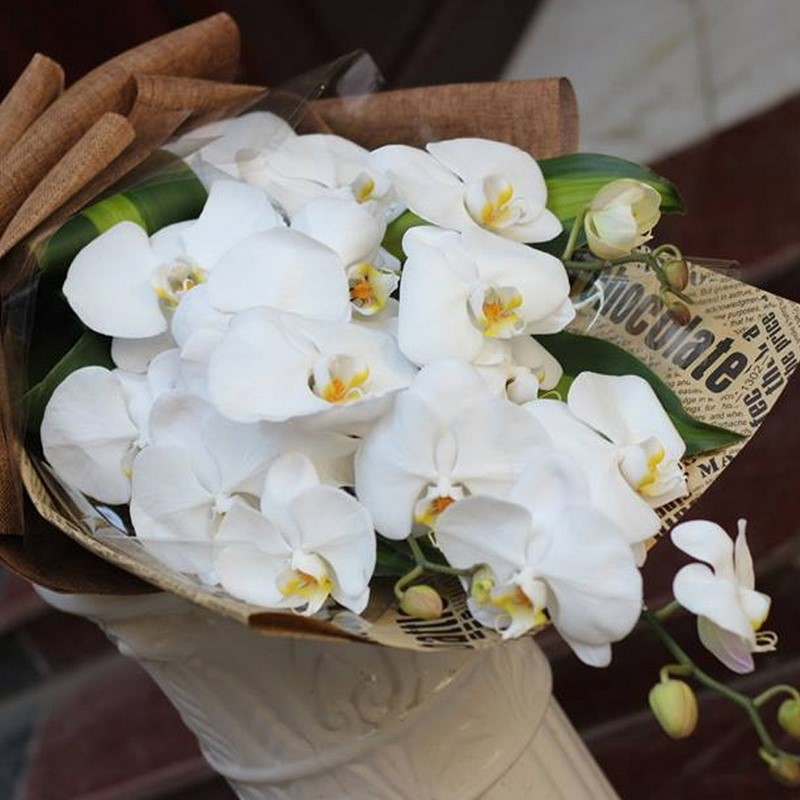 bó hoa lan màu trắng tinh khôi