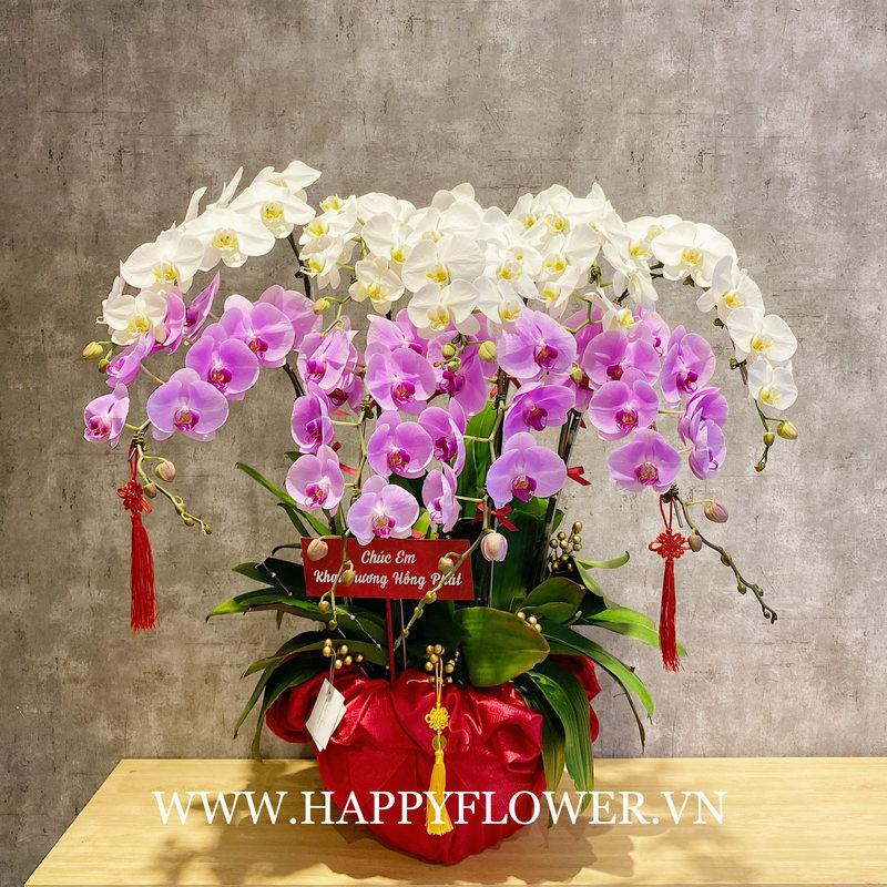 châu hoa sinh nhật lan hồ điệp trắng mix lan hồ điệp tím