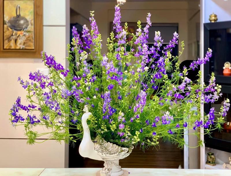 chậu hoa sinh nhật violet tinh tế