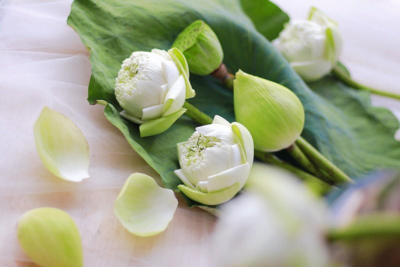 tặng hoa sinh nhật sen trắng