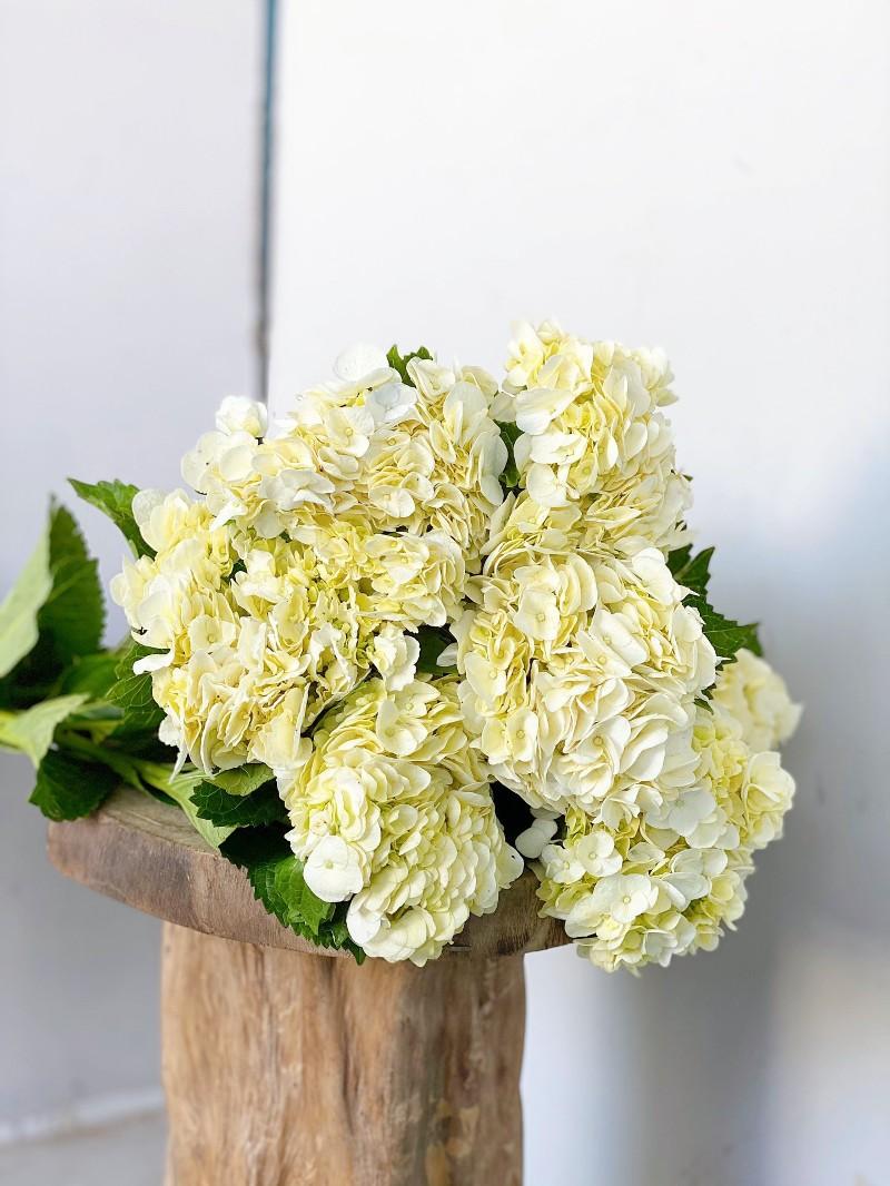Bó hoa cẩm tú cầu tuyệt đẹp
