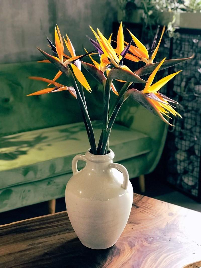 Bình hoa thiên điều đẹp lạ