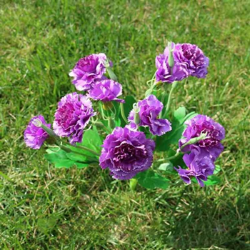 hoa cẩm chướng màu tím tặng sinh nhật