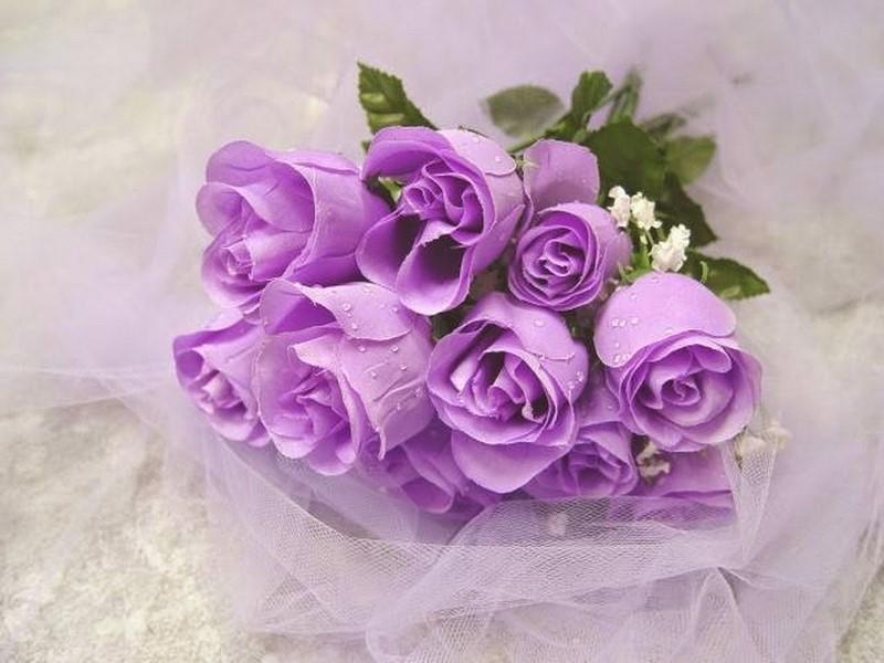 bó hoa hồng màu tím đẹp tặng sinh nhật