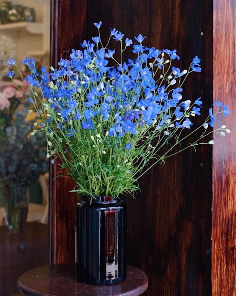 chậu hoa phi yến xanh rạng rỡ