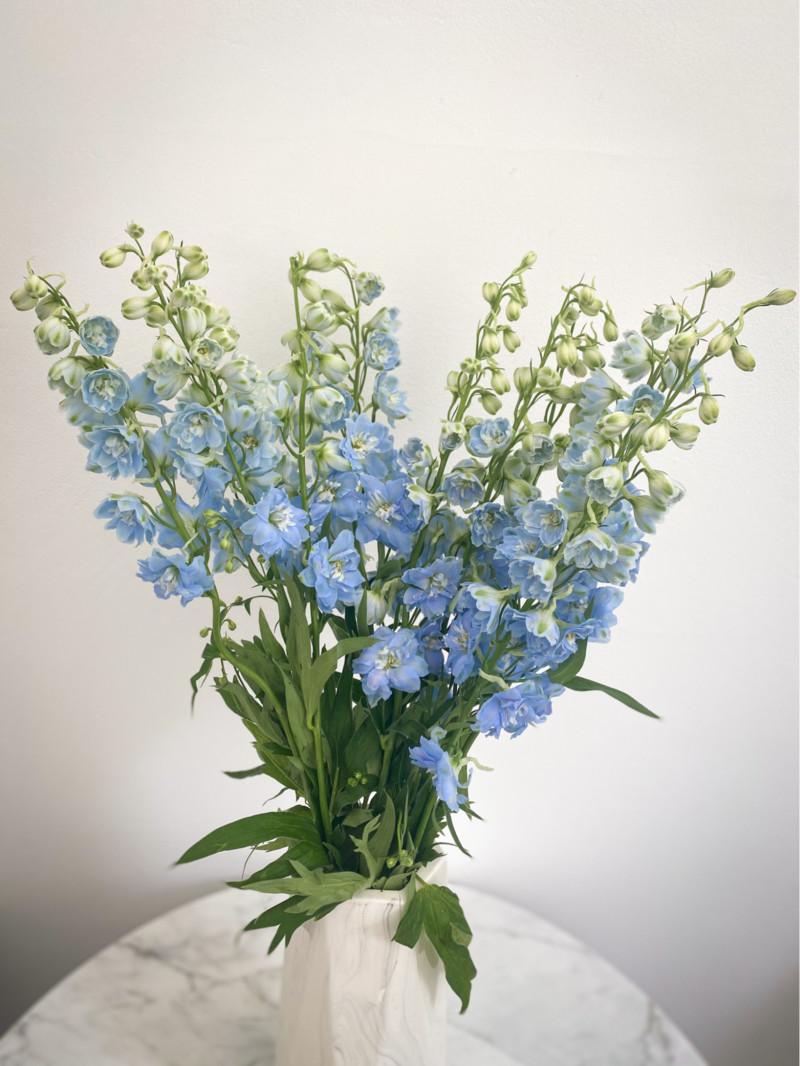 chậu hoa phi yến xanh khiết nhã nhặn