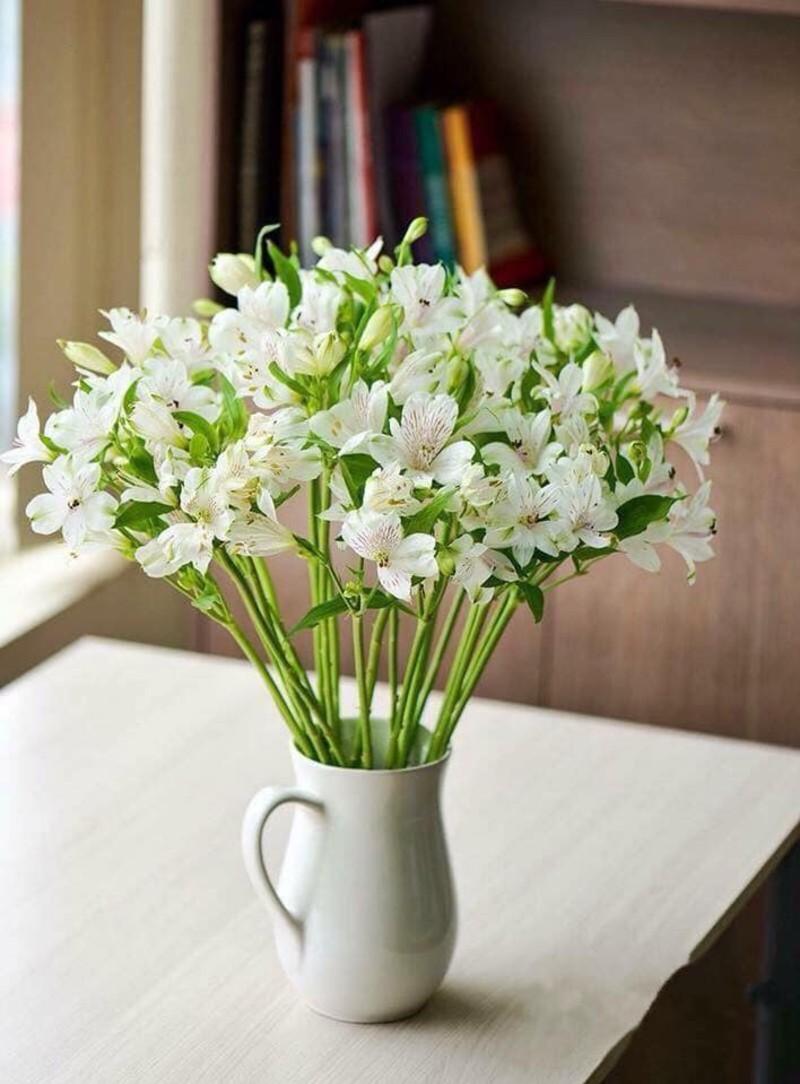 Đóa hoa thủy tiên tặng sinh nhật