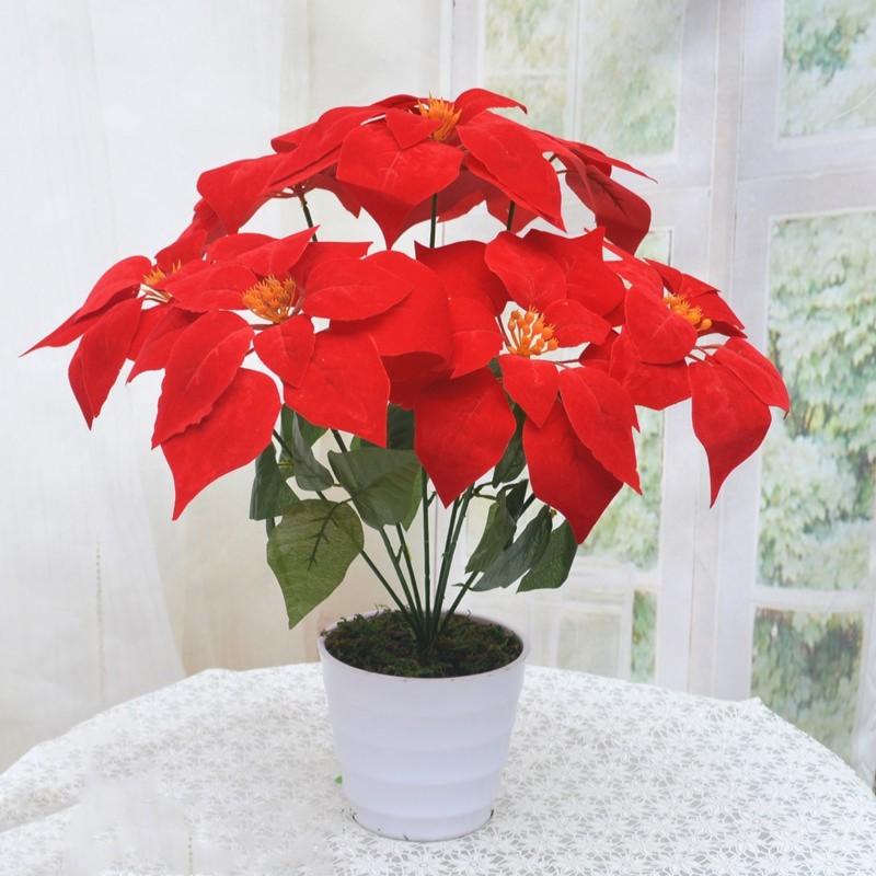 Hoa trạng nguyên màu đỏ rực
