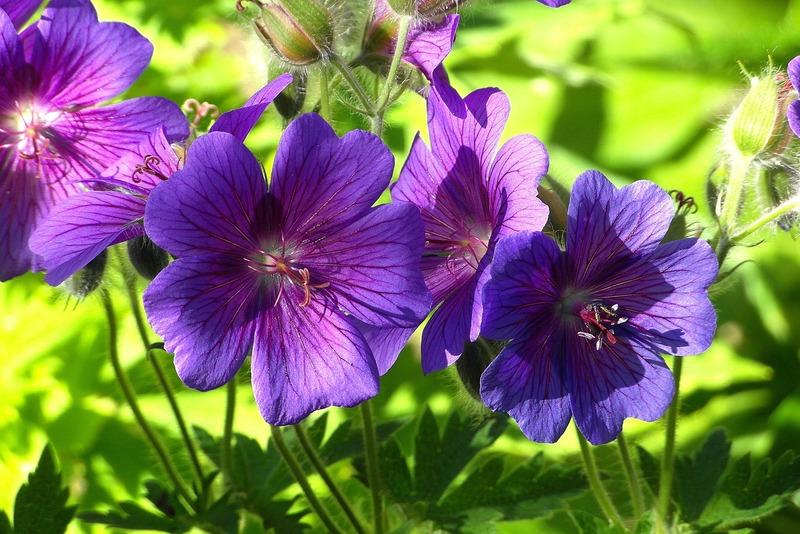 hoa violet tím cho sinh nhật tháng 2
