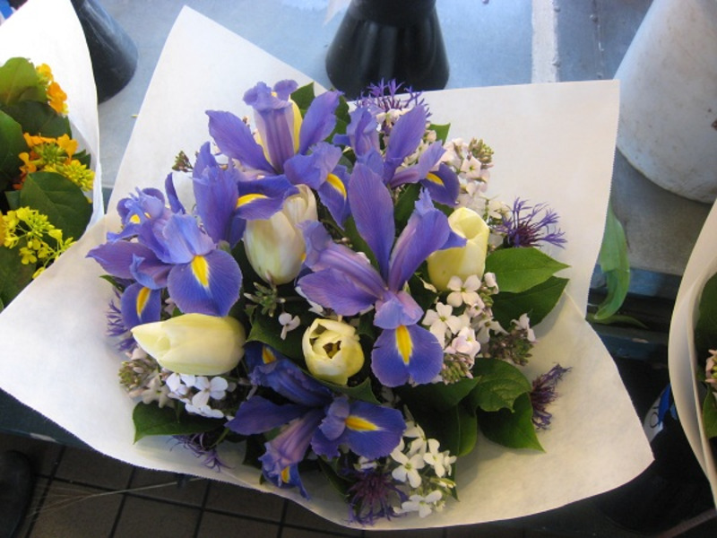 bó hoa sinh nhật tháng 2 hoa diên vỹ xanh
